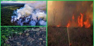 अमेजन जंगल आग